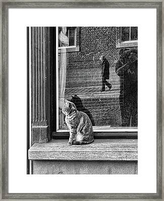 The Cat, The Lady And ... Framed Print