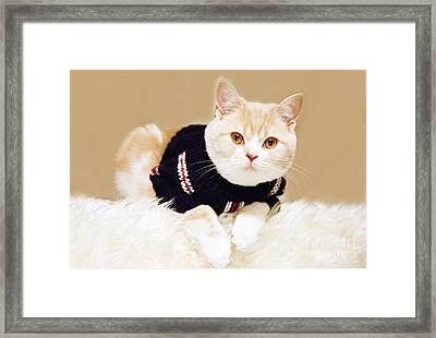 The Cat Wears Sweater Framed Print by Aiolos Greek Collections