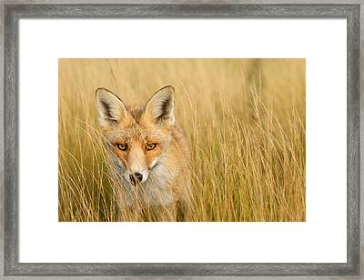 The Catcher In The Grass Framed Print