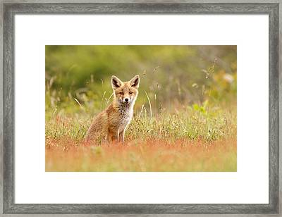 The Catcher In The Sorrel Framed Print by Roeselien Raimond