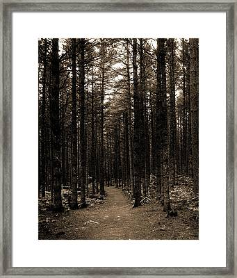 The Cathedral Woods, North Conway, White Mountains Framed Print by Litz Collection