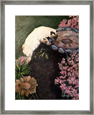 The Cats In The Garden Framed Print