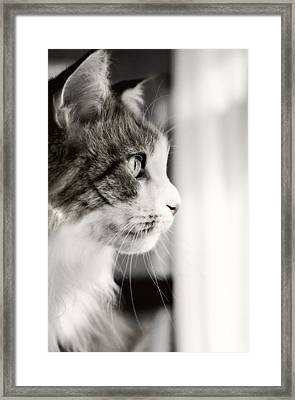 The Cat's Meow Framed Print