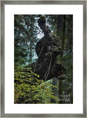 The Centaur Framed Print by Belinda Greb