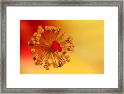 The Center Of The Hibiscus Flower Framed Print by Debbie Oppermann