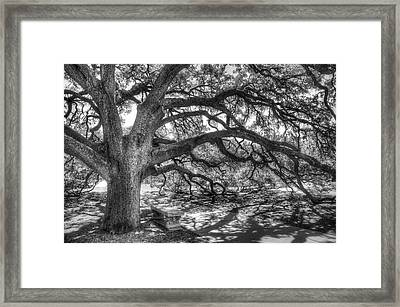 The Century Oak Framed Print by Scott Norris