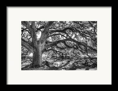 Trunks Framed Prints