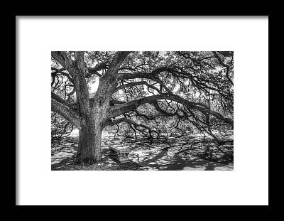 Tree Bark Framed Prints