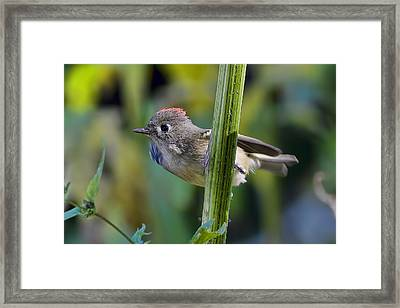 Framed Print featuring the photograph The Challenge by Gary Holmes