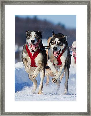 The Champions Framed Print by Mircea Costina Photography