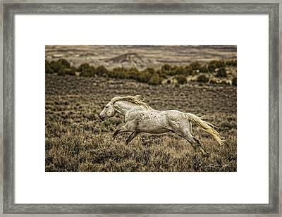 The Chaperone Framed Print