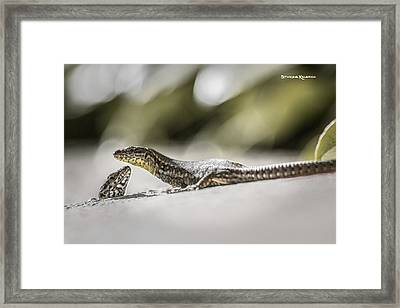 Framed Print featuring the photograph The Charming Lizards by Stwayne Keubrick