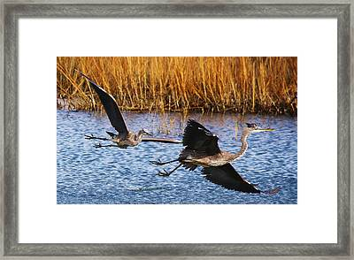 The Chase - # 22 Framed Print by Paulette Thomas
