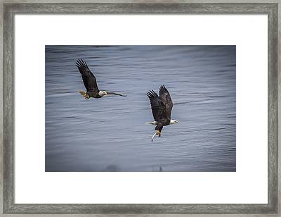 The Chase Framed Print by Eduard Moldoveanu