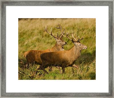 Framed Print featuring the photograph The Chase by Paul Scoullar