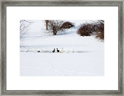 Framed Print featuring the photograph The Chattering Gaggle by Courtney Webster