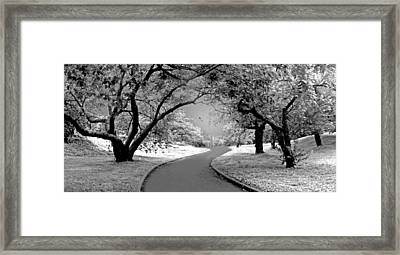 The Cherry Orchard Infrared Framed Print by Jessica Jenney
