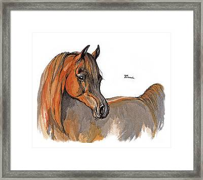 The Chestnut Arabian Horse 2a Framed Print by Angel  Tarantella