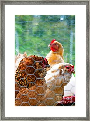 The Chickens Framed Print by Gwyn Newcombe