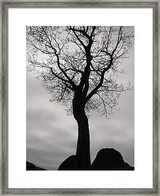 The Chill Of Spring In The Shenandoah Framed Print