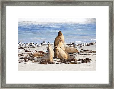 The Choir Framed Print by Mike Dawson