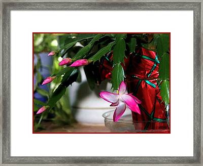 The Christmas Cactus Framed Print by Jim  Darnall