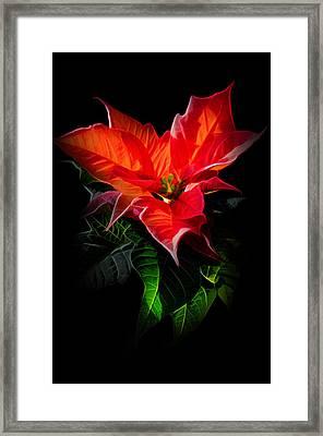 The Christmas Flower - Poinsettia Framed Print by Gynt