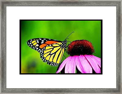 The Clarity Of Morning Light Framed Print by Susanne Still