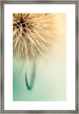 The Claw Framed Print by Nicolino Sapio