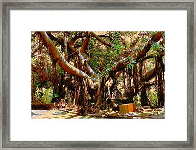 The Climbing Tree Framed Print