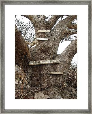 The Climbing Tree - Hurricane Katrina Survivor Framed Print