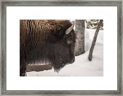 The Close Up Framed Print