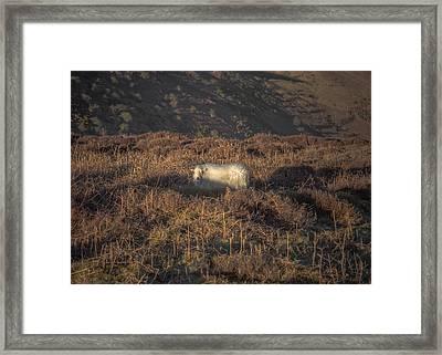 The Cloud Sheep Framed Print by Chris Fletcher