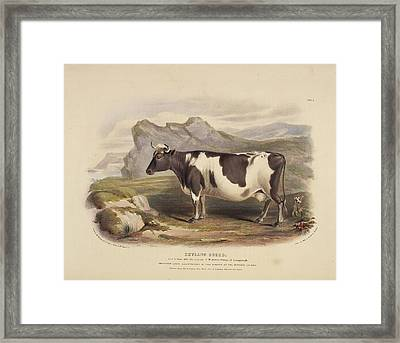 The Clydeside Breed Framed Print by British Library