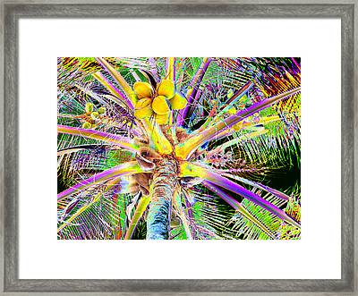 The Coconut Tree Framed Print