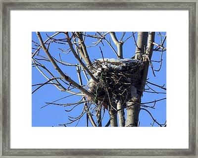 Framed Print featuring the photograph The Cold Nest by Nick Mares