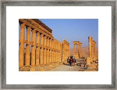 The Colonnaded Street Palmyra Syria Framed Print by Robert Preston