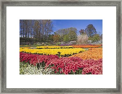 The Color Garden Framed Print