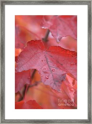 The Color Of Autumn Framed Print by Rich Collins