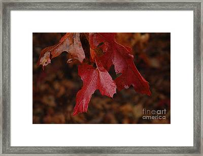 The Color Of Fall Framed Print by Art Hill Studios