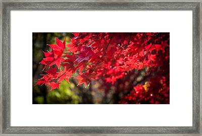 The Color Of Fall Framed Print by Patrice Zinck