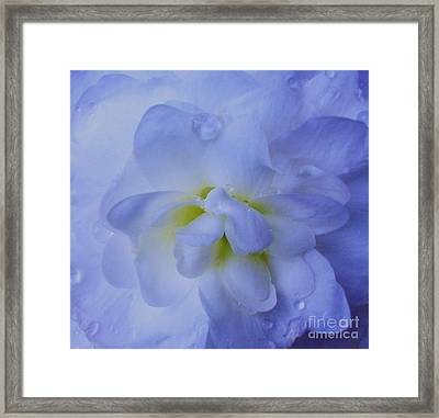 The Color Of Rain Framed Print
