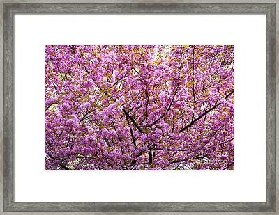 The Color Purple 2 Framed Print by Paul W Faust -  Impressions of Light