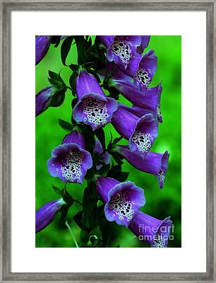 The Color Purple Framed Print by Kathleen Struckle