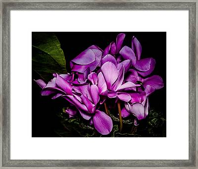 The Color Purple Framed Print by Len Romanick