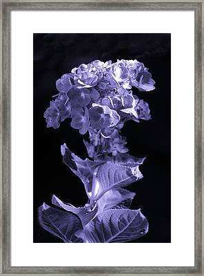The Color Purple Framed Print by Sandi OReilly