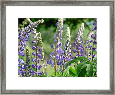 The Color Purple Framed Print by Terry Eve Tanner