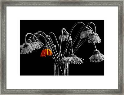 The Colorful One Framed Print