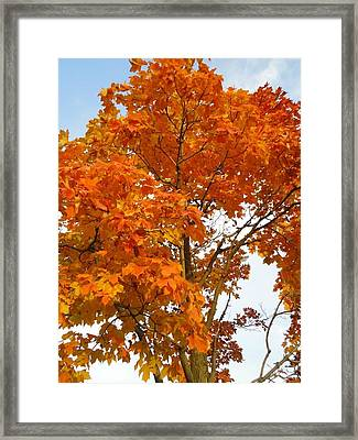The Colors Brought To Autumn Framed Print by Guy Ricketts