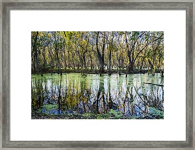 The Colors Of Alligator Swamp Framed Print by Ellie Teramoto